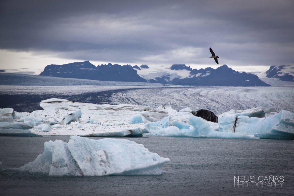 Laguna glaciar de Jokulsarlon en el sur de Islandia. ©Neus Cañas.