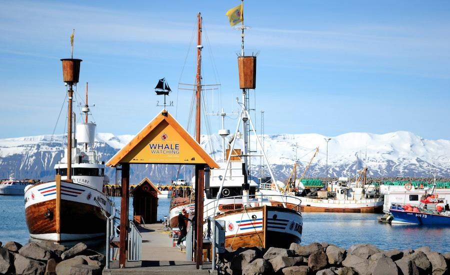Desde Húsavík salen muchas excursiones para avistar ballenas y frailecillos. Foto de Goldelie.
