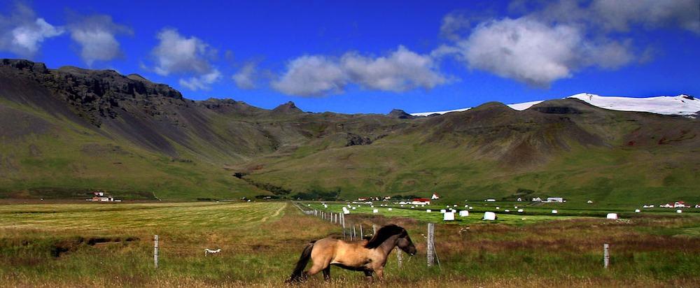 Panorama islandés con granjas y caballos.