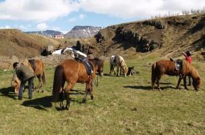 La monta de los caballos islandeses atrae todos los años a cientos y cientos de turistas. Foto de SteveInLeighton