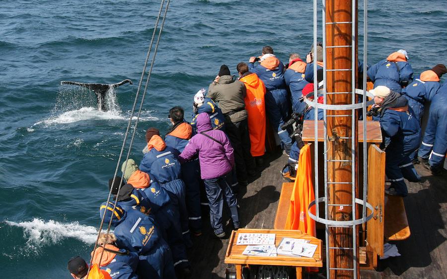 Excursión para observar ballenas en aguas islandesas, toda una experiencia. Foto de Göran Ingman.