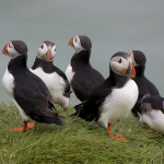 Avistamiento de ballenas y excursiones a las islas de los frailecillos